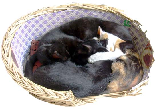 """Xiaohei (Little Black) and her two kids sleeping"""